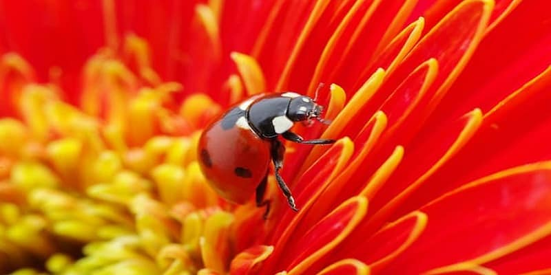 Ladybug Spirit Animal Ultimate Guide